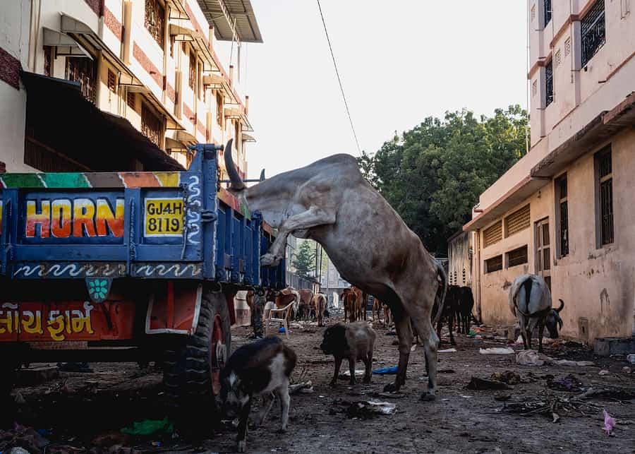 india travel photography0015