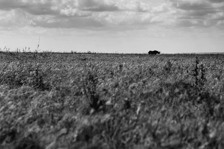 nairobi safari photographer